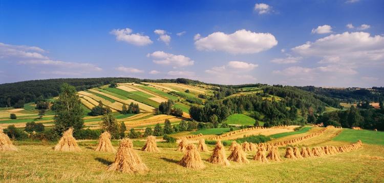 Υποστήριξη δράσεων ενημέρωσης σχετικά με την κοινή γεωργική πολιτική (ΚΓΠ)» για το 2017