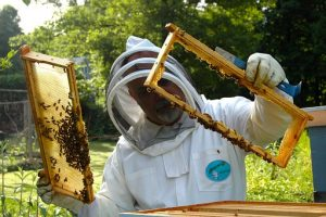 (Ελληνικά) Μελισσοκομικό Πρόγραμμα 2020 – 2022 για το Έτος 2021